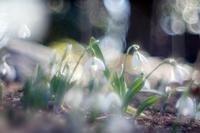 森林公園の花たち3 - 光の 音色を聞きながら Ⅵ