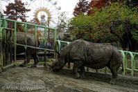 熊本市動植物園-動物たち - Mark.M.Watanabeの熊本撮影紀行