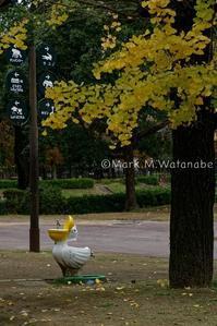 熊本市動植物園-ペリカン - Mark.M.Watanabeの熊本撮影紀行