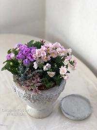 嬉しいお手伝い - Gardener*s Diary