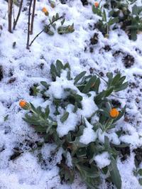 うっすら雪景色 - 自然を見つめて自分と向き合う心の花