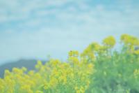 日曜日の春。 - Yuruyuru Photograph