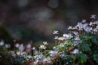 森の楽園 - duke days