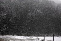 朽木小川、小雪ですが・・・大雪警報・発表中! - 朽木小川より 「itiのデジカメ日記」 高島市の奥山・針畑からフォトエッセイ