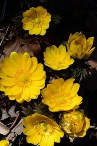 春のお花が次々と* - *la nature*