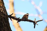生田緑地の野鳥 - 写真の記憶