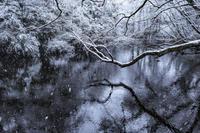 雪景色の池 - Capu-photo Digital photographic Laboratory