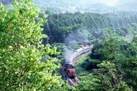 緑爽やかな頃- 1986年・函館本線 - - ねこの撮った汽車