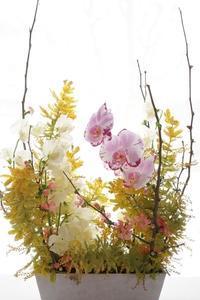ボケと胡蝶蘭、スイトピーのコンポジション - お花に囲まれて