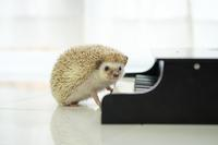 ピアノの先生 - 2度目のリタイア後のライフ