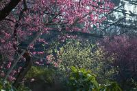 それでもやってきた春の兆し - RANDOM SHOT Ⅱ