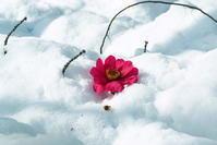 *雪* - さぬき風花