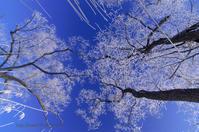 枯れ木に花を・・ - デジタルで見ていた風景