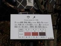 高崎市染料植物園 (2021/2/16撮影) - toshiさんのお気楽ブログ