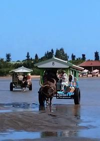 西表島水林旅行5. 2日目由布島に牛車で渡り、花と蝶をみる - 鴎庵