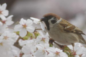 鳥さんが来る庭でありたい - ご機嫌元氣 猫の森公式ブログ