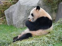 2021年2月白浜パンダ見隊その5 - ハープの徒然草