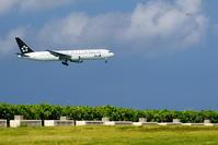 緑とのマッチング - 南の島の飛行機日記