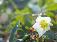 森林公園の花たち4 - 光の 音色を聞きながら Ⅵ