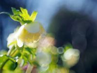 森林公園の花たち5 - 光の 音色を聞きながら Ⅵ