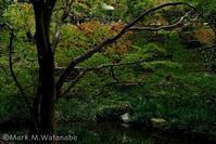 熊本市動植物園-日本庭園 - Mark.M.Watanabeの熊本撮影紀行