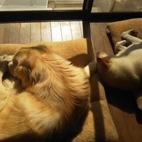 イヌ育ては大変だけど - Hanakenhana's Blog