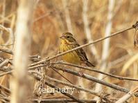 野鳥と冬の楽園 - park diary