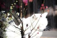 Happy  Caturday - 日々雑感