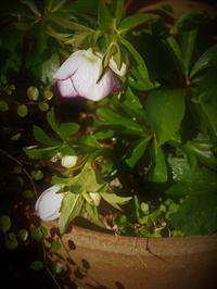 のんびり土曜日 - hibariの巣