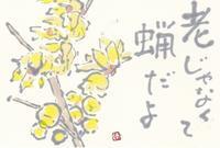 蝋梅「老じゃなくて蝋だよ」 - ムッチャンの絵手紙日記