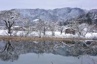 琵琶湖周辺の雪景色メタセコイヤ並木・余呉湖 - 峰さんの山あるき