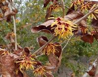 路傍の花、樹々の鳥(397)~春、真っ先に咲くから・・・~ - 大屋地爵士のJAZZYな生活