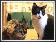 猫団子は期待しないで。 - キルトとステッチ時々にゃんこ