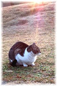 モンローウォーク・・・Happy Caturday♪ - おだやかに たのしく Que Sera Sera