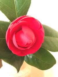 開きゆく姿の美しさ - 自然を見つめて自分と向き合う心の花