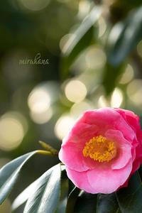 PINK×PINK。 - MIRU'S PHOTO