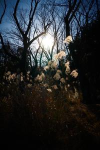sun -     ~風に乗って~    Present