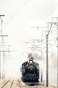 白から飛び出す - 蒸気屋が贈る日々の写真-exciteVer