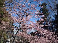 永谷、早春の旅 #2 - 神奈川徒歩々旅
