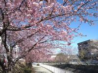 永谷、早春の旅 #4 - 神奈川徒歩々旅
