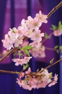 優雅な春 - 木洩れ日 青葉 photo散歩
