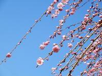むかしの春 * au printemps d' antan - ももさへづり*うた暦*Cent Chants d' une Chouette