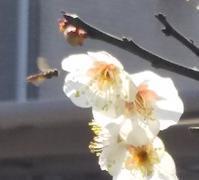 小さき体に春の魂 - 虫のひとりごと