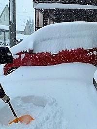 またまた大雪(>_ - わんわん・パラダイス