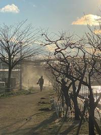 荒野の○人⁈ - 造園屋さんの造園でない個人ブログ 和み園芸