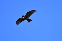 夕暮れの森で・・・ - 鳥と共に日々是好日②