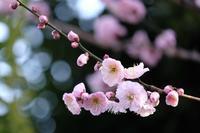 春の陽気 - 錦眼鏡