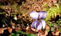 雨水土脉潤起(つちのしょううるおいおこる) - 紀州里山の蝶たち