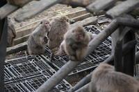 続々・ウィンキー、サル団子の旅 - peanut daily 3