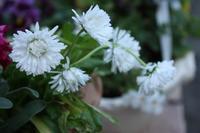 暖かい日でした、お花も元気 - L'Écume des jours